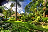 Banana Azul Tropischer Garten