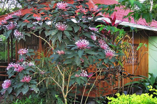 Coral Hill Garten
