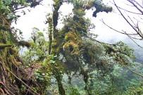 Epyphyten_Monteverde_Nebelwald_2_Foto Iris -2013