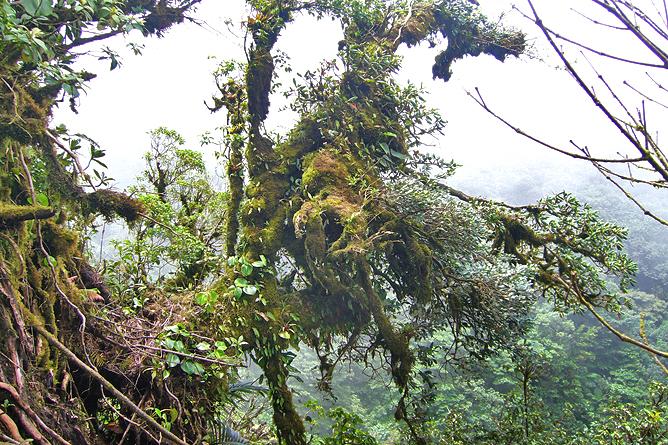Epyphyten Monteverde Nebelwald