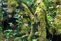 Epyphyten_Monteverde_Nebelwald_3_Foto Iris -2013