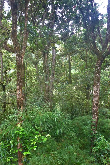 Epyphyten Nebelwald San Gerardo de Dota
