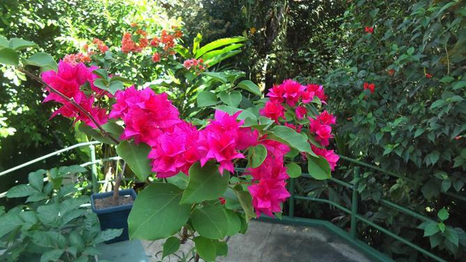 Mandarina Garten