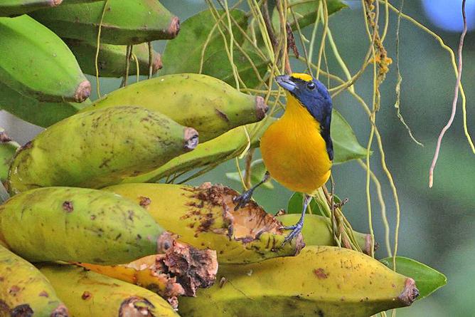 Posada Rio Celeste Vogelbeobachtung