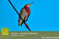 Quelitales_birding-vogelbeobachtung_27-01-2018