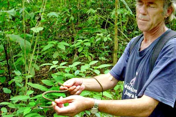 Wanderung Los Patos-Sirena Dschungel Schlange Mike Osa Ventura