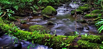 touren-monteverde-micha-