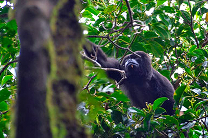 Touren Monteverde Brüllaffe