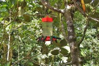 touren-monteverde-micha-cafe-colibri