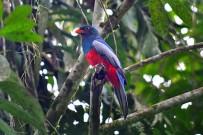 Manzanillo Gandoca Wildarten Reservat Vogel