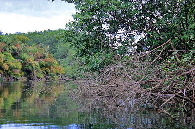 Manzanillo Gandoca Wildarten Refugium Lagune