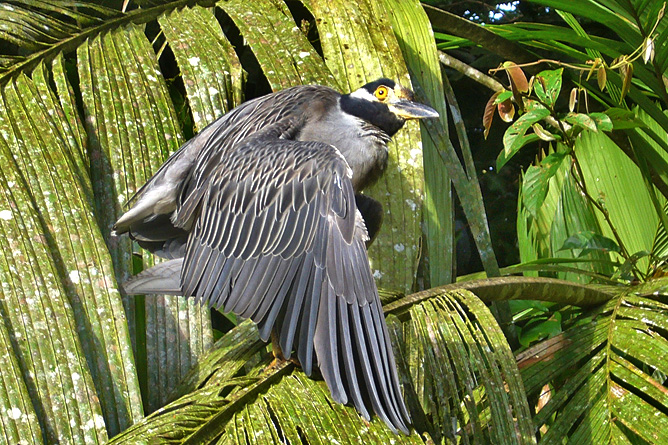 Tortuguero Bootstour Kanal Vogelbeobachtung