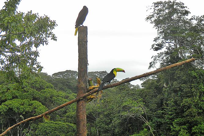 Tukan und Montezuma Vogel Lagarto Lodge