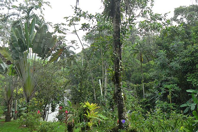 Tukan Lebensraum Tiefregenwald
