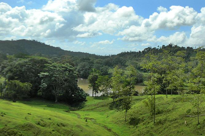 Tukan Lebenswald tropische Regenwälder