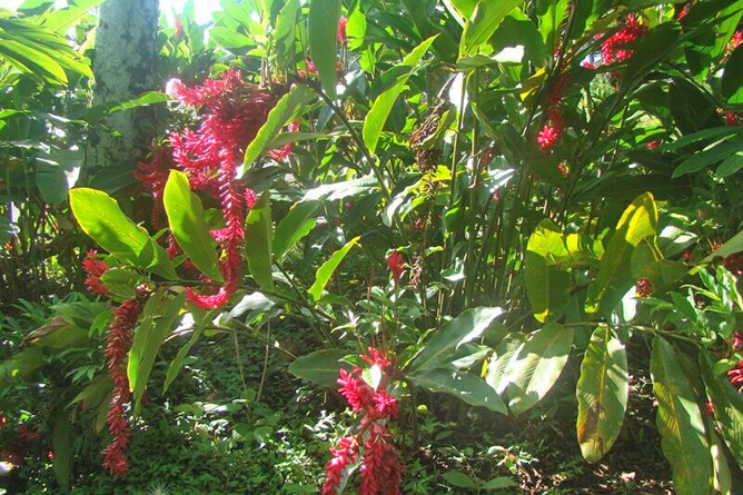 Josipek Botanischer Garten