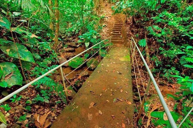Josipek privates Waldgrundstück