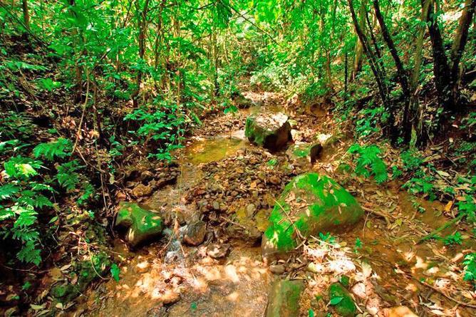 Josipek privates Waldgrundstück Fluss