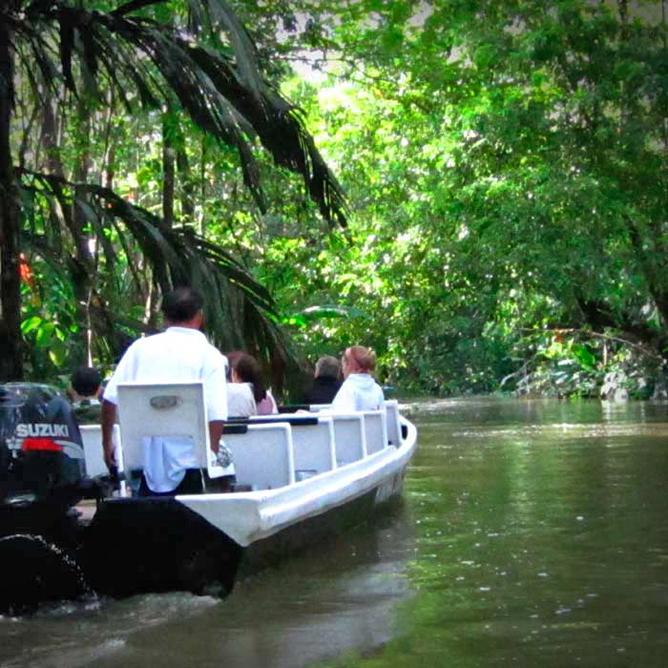 Rana Roja Bootstouren Tortuguero Kanal