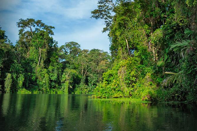 Rana Roja Tortuguero Kanal