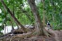 Cahuita Regenwald Wanderung