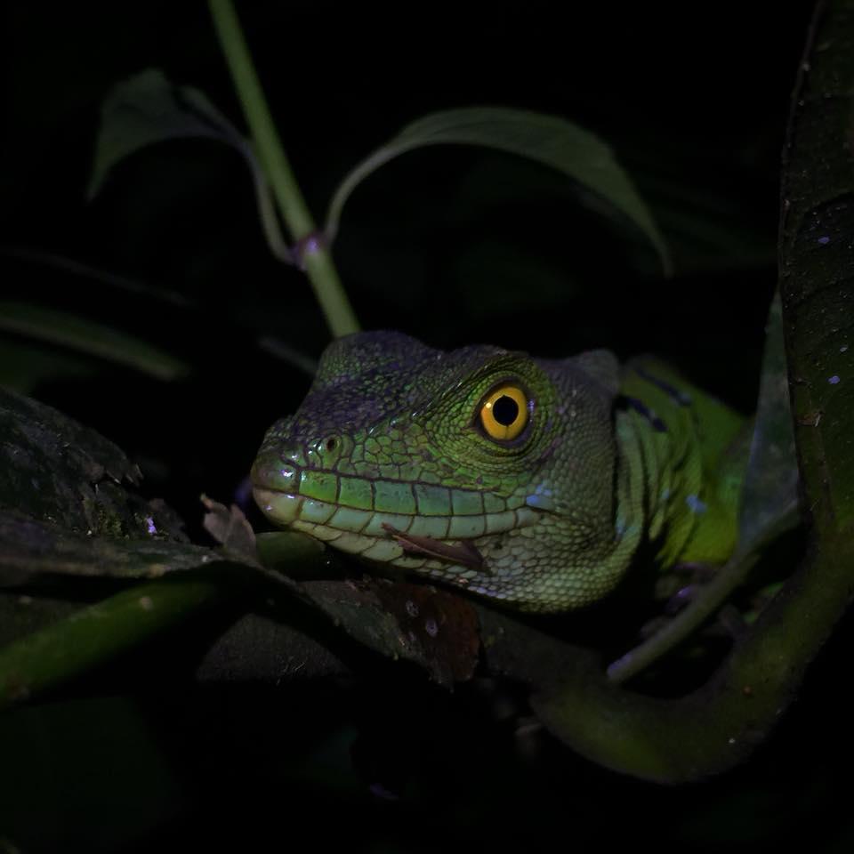 Ecocentro Danaus Nachttour