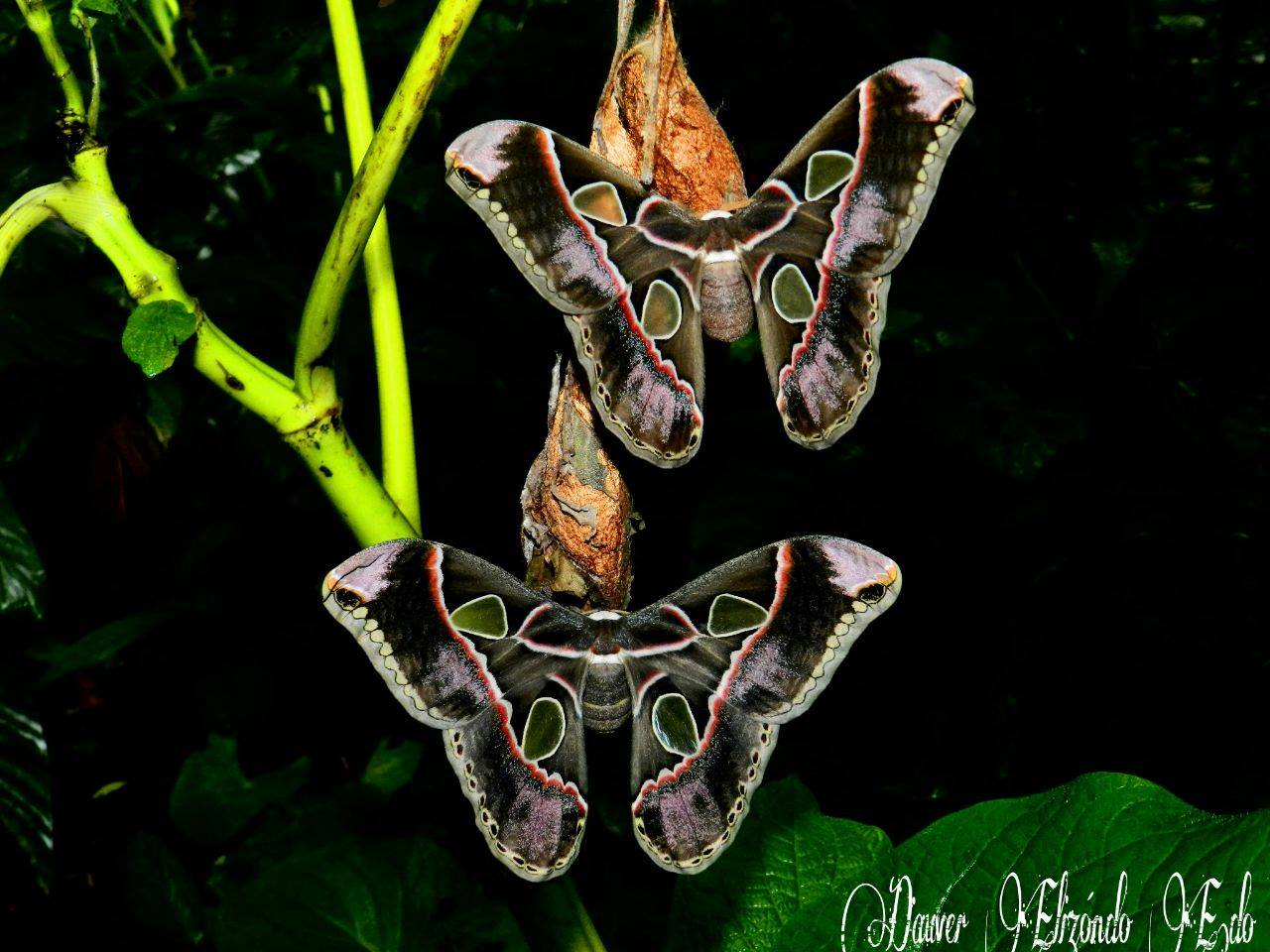 Ecocentro Danaus Nachttour Schmetterlinge
