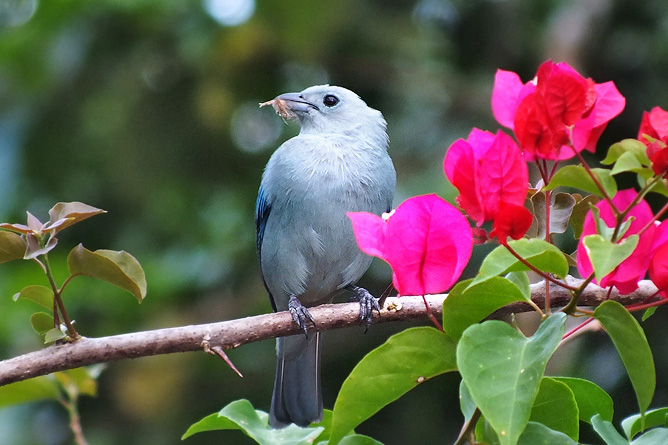 Vogelbeobachtung Bischofstangar Cahuita Tours