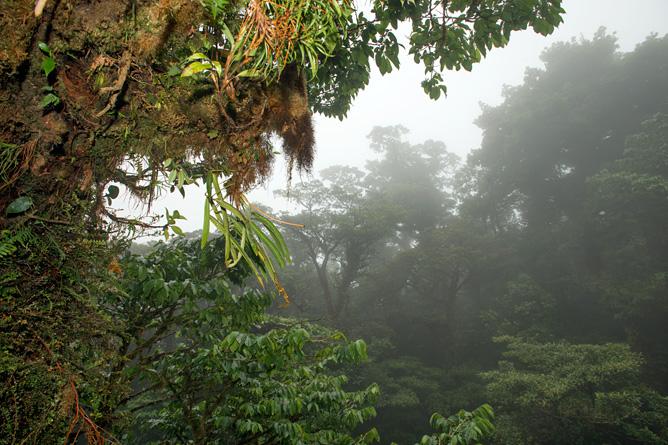 costa-rica-wilfried-regenwald-03