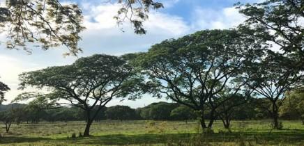 La-Casona-Guanacaste_Guanacaste_1_