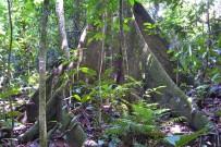Manuel-Antonio-Nationalpark_13_Foto-Iris-2013