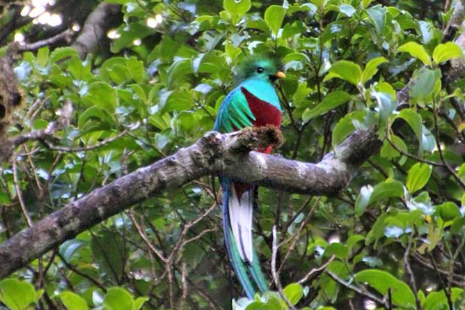 Monteverde Ecolodge Quetzal Vogel