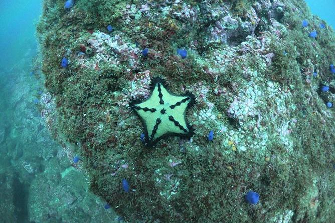 Tauchen Catalinas Korallen