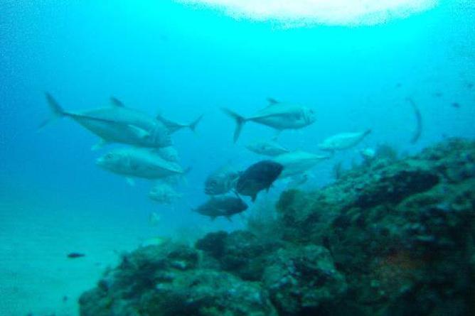 Tauchen Isla Caño Fischschwarm