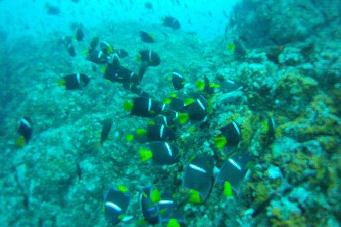 Tauchen Isla Caño Fischkolonie