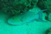 Tauchen_Isla Cano_Tauchen in den Korallenbaenken_Foto Micha 08-2018