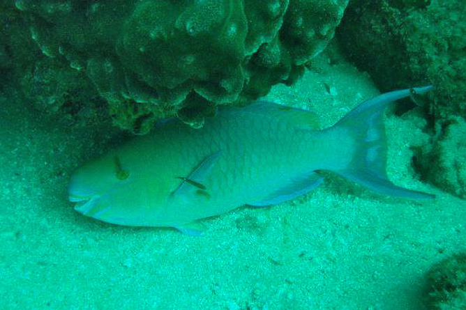 Tauchen Isla Caño Tauchen in den Korallenbänken
