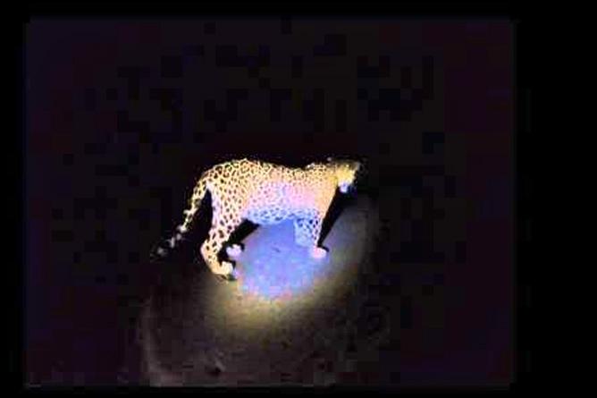 Jaguar Kamerafalle im Dschungel