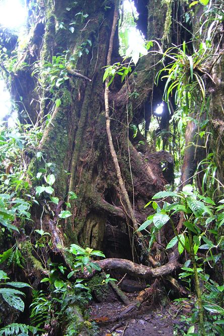 Jaguar Lebensraum Dschungel