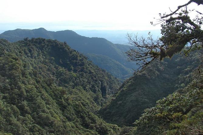 Jaguar Lebensraum Monteverde