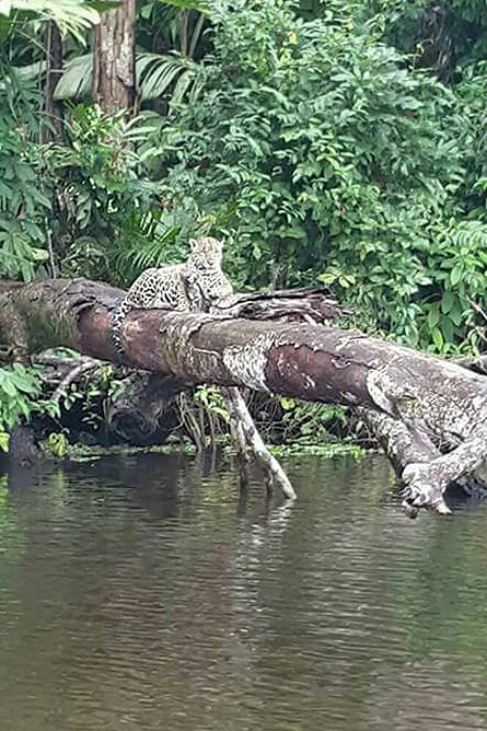 Lirio Lodge Jaguar Barra de Pacuare