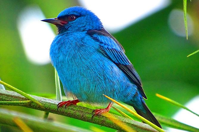 Maquenque Wildarten Refugium Vogelbeobachtung