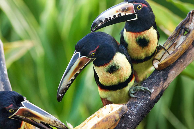 Pedacito de Cielo Vogelbeobachtung Tucancillos Reservat Camino de San Juan