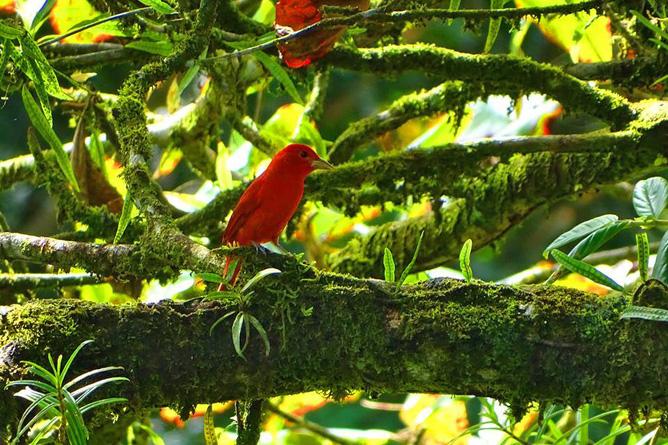 Pedacito de Cielo Vogelbeobachtung Reservat Camino de San Juan