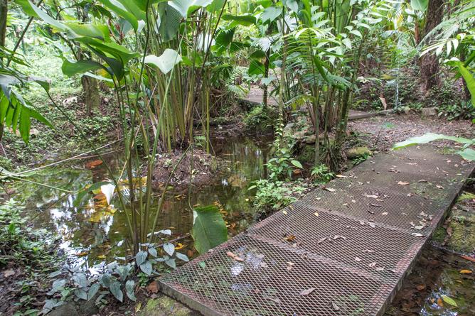 Arenal Oasis Froschtour Weg um den Teich
