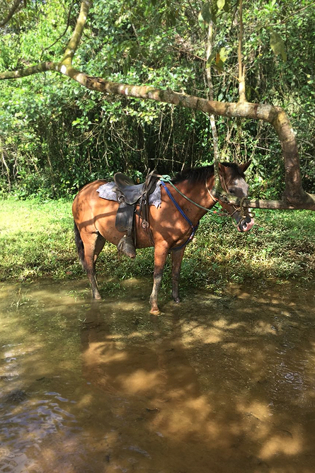 Gold Tour Reitpferd Lagune
