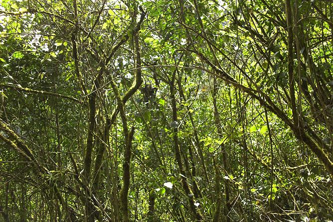 Maro Wandertour Sekundär Wald
