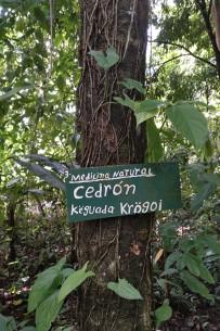 Ngoebe_Medizinische Pflanzen_Foto Uli_05-2018