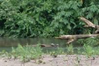 Ngoebe_Naturwanderung_Fluss_Foto Uli_05-2018