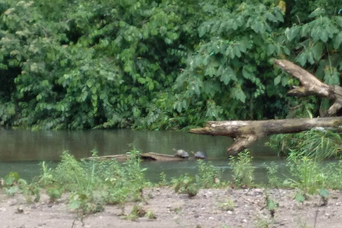 Ngoebe Naturwanderung Fluss